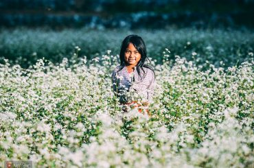 Buckwheat Flower Festival 1 Vietnam tour