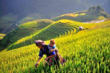 Mu Cang Chai 3 - Vietnam tours
